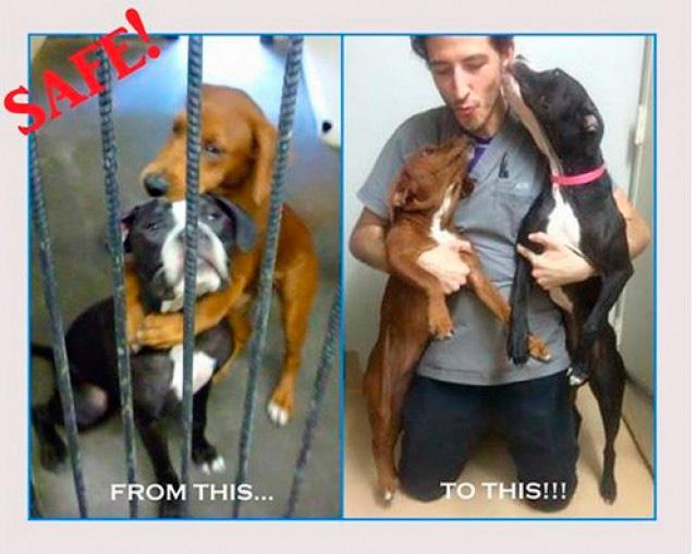 estos-dos-perros-se-abrazan-y-se-salvan-de-morir-2-2015